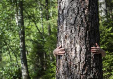 Nainen halaa puunrunkoa takaa päin