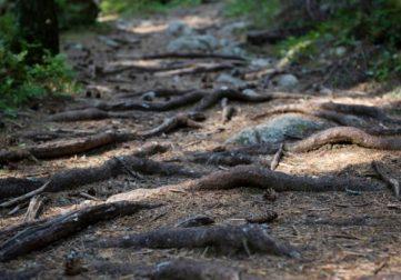 vaikeakulkuinen polku metsässä